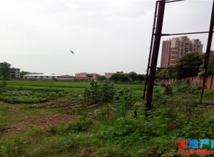 泰和澄江镇政府旁有土地挂牌出让啦!起拍价...